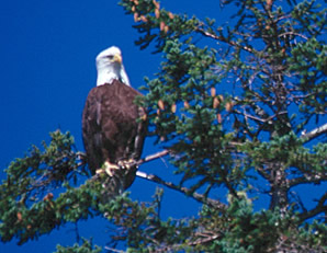 lodge_eco_eagle